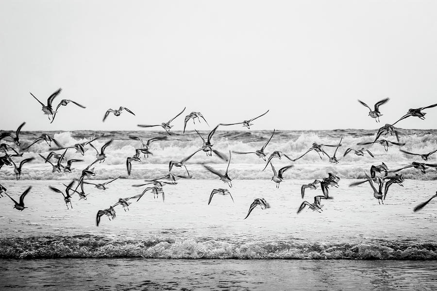 Feathered Frenzy by Cate Franklyn