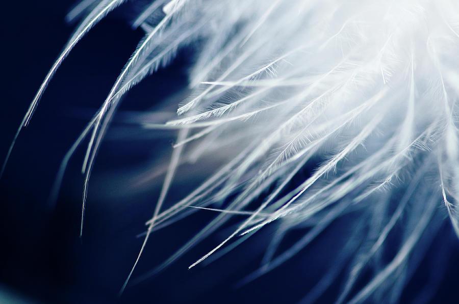 Feathers Cold Photograph by Created By Tafari K. Stevenson-howard