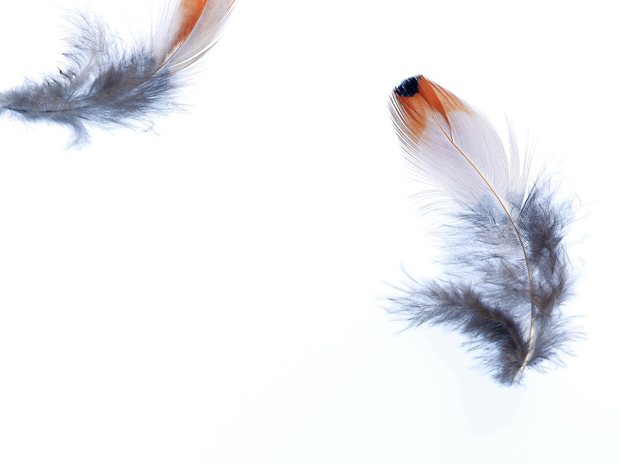 Feathers Floating In The Wind Photograph by Peter Dazeley