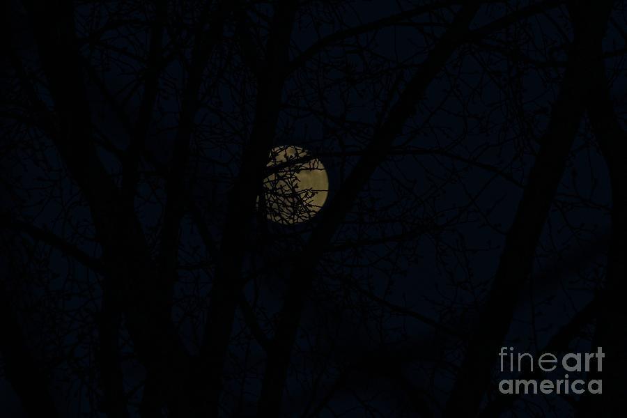 February Snow Moon by Ann E Robson