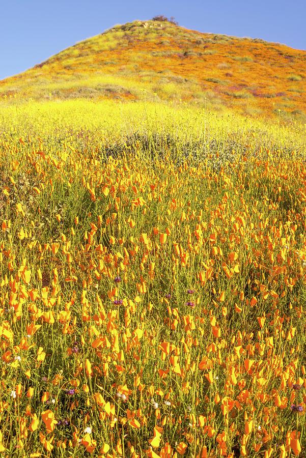 Feeling Orange #2 by Joseph S Giacalone
