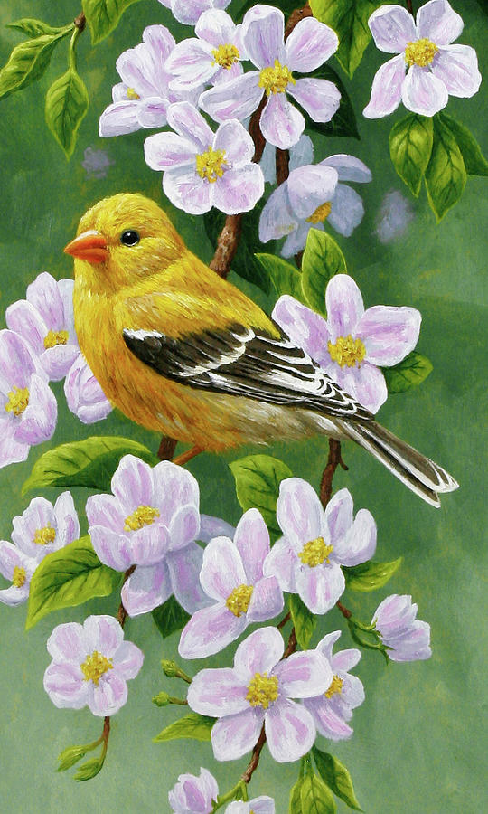 Bird Painting - Female American Goldfinch And Apple Blossoms by Crista Forest