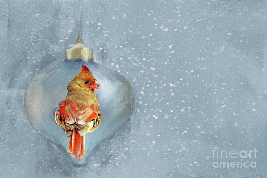 Female Cardinal at Christmas by Janette Boyd
