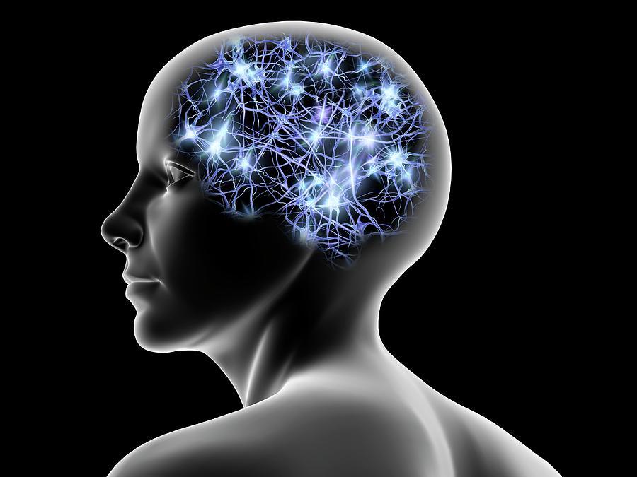 Female Head And Nerve Cells, Artwork Digital Art by Pasieka