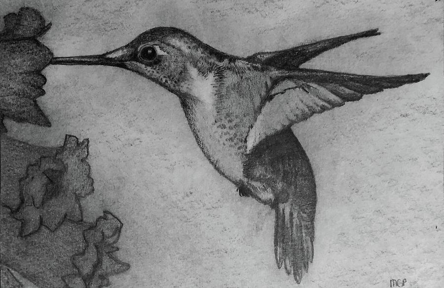 Female Ruby Throated Hummingbird Drawing