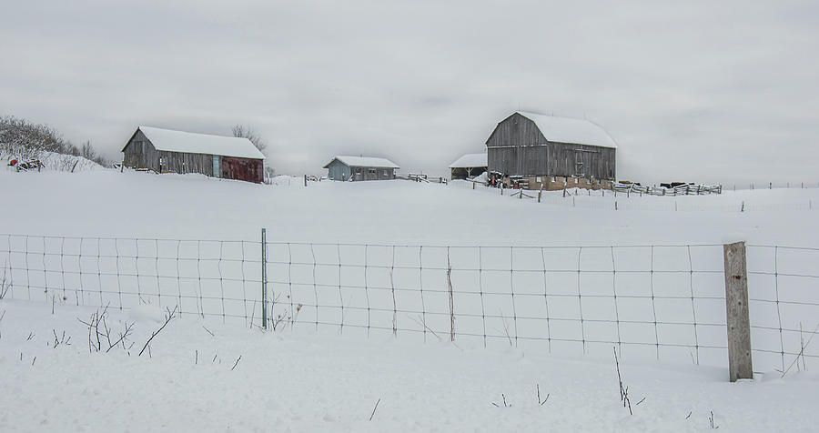Fence And Farm by Andrew Wilson