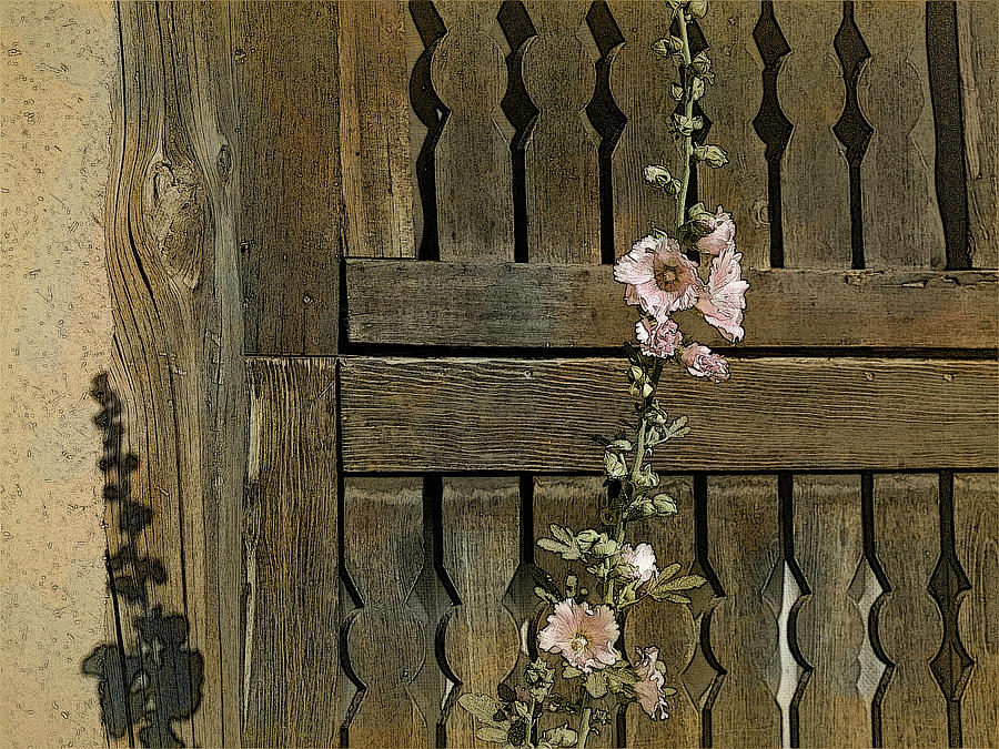 Fence and Hollyhocks by Western Light Graphics