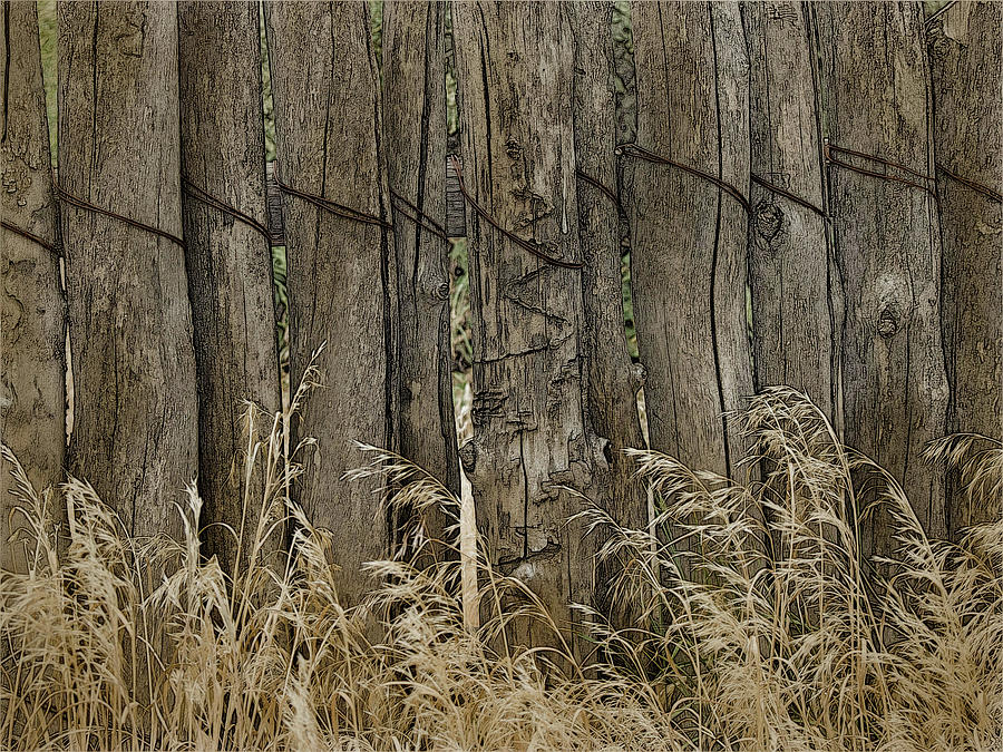 Fence, Wire and Grass by Western Light Graphics