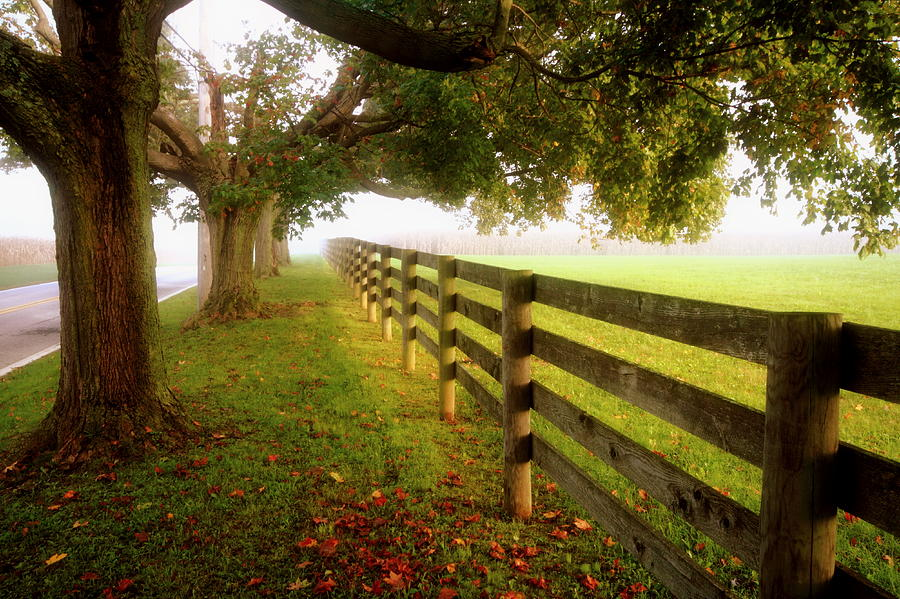 Fences And Trees Photograph by Carson Lin, West Chester, Pennsylvania