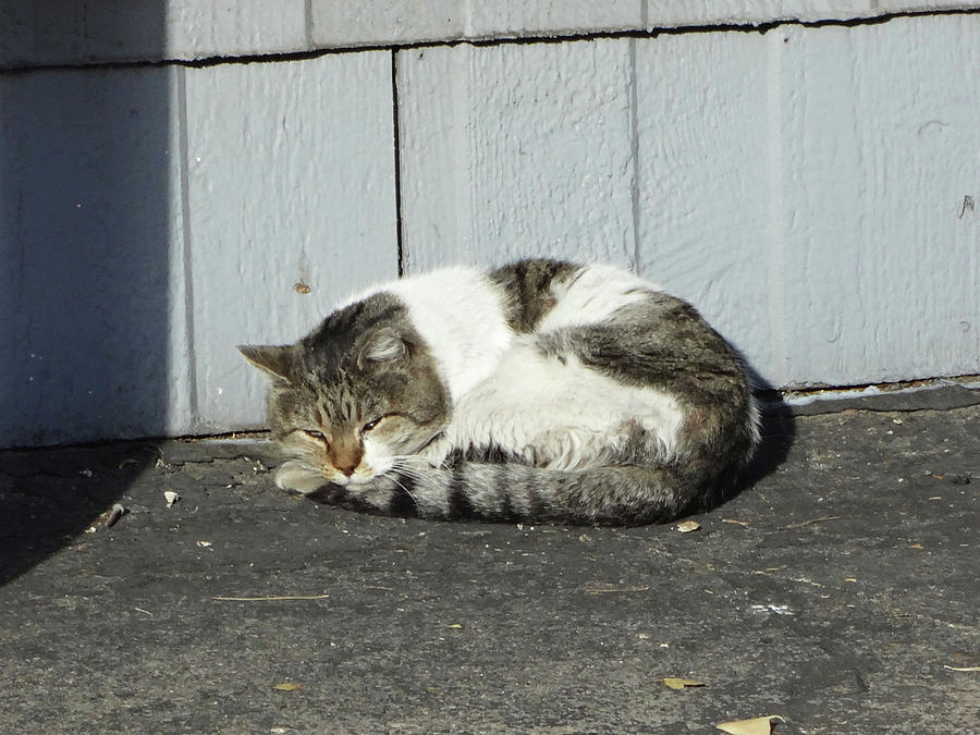 Cats Photograph - Feral 3 by Bruce IORIO