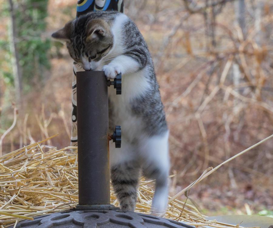 Feral Kitten by Buddy Scott