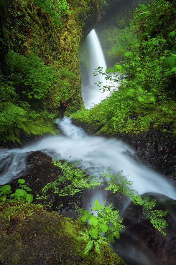 Fern Falls by Darren White