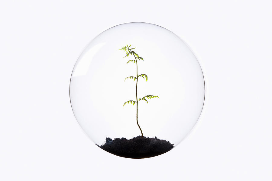 Fern Growing Inside Glass Orb Photograph by Thomas Jackson