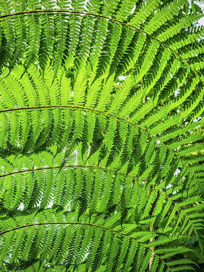 Fern Photograph - Fern by Nick Bywater