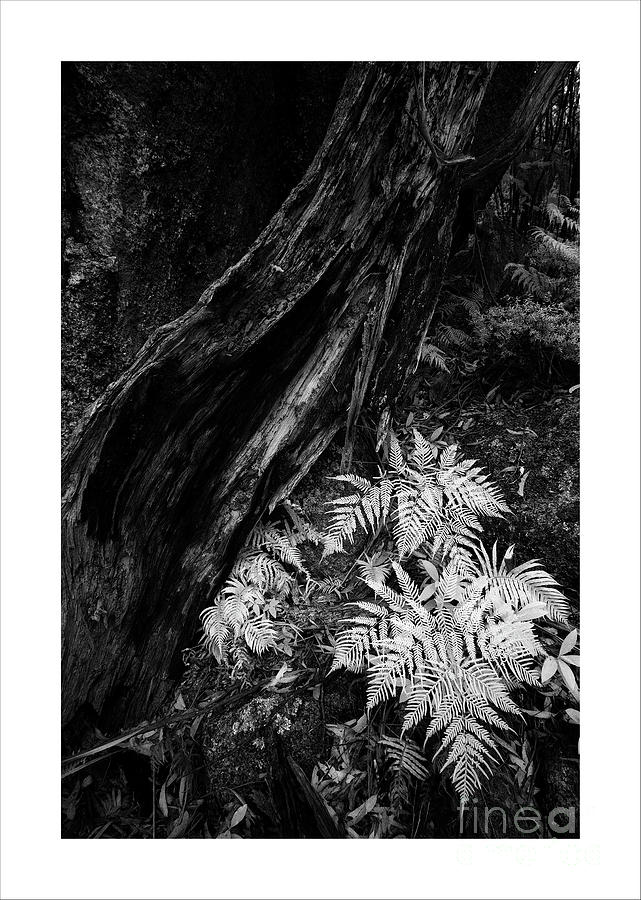 Fern by Russell Brown