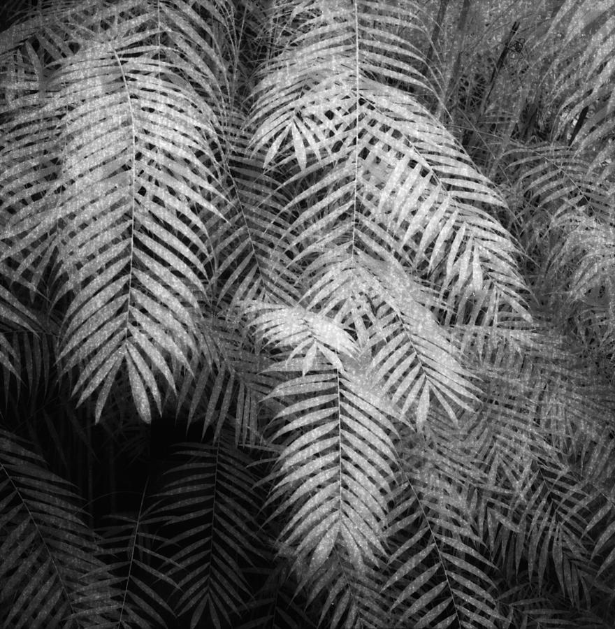 Fern Variations In Infrared Photograph by Andreina Schoeberlein