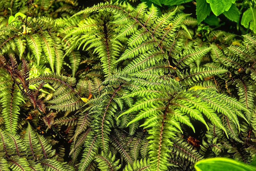 Ferns by Allen Nice-Webb
