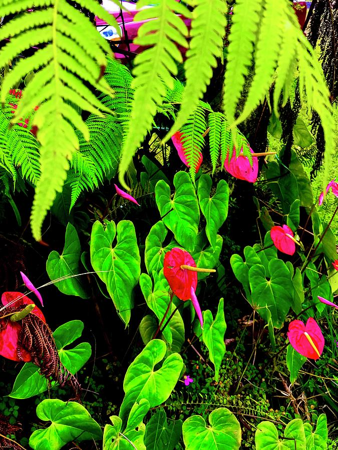 Ferns And Anthuriums  by Joalene Young