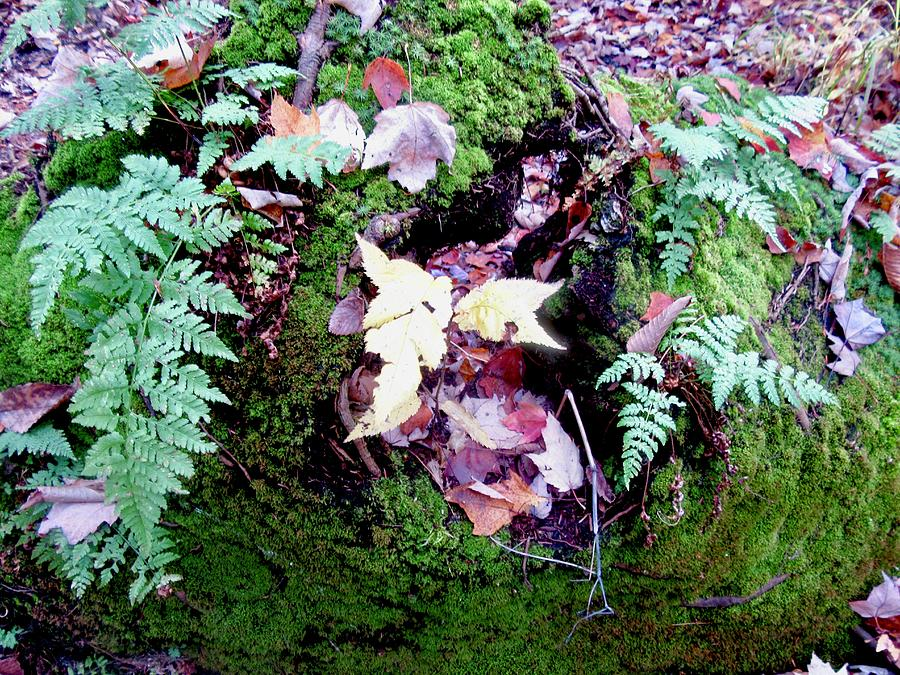 Ferns and Leaves by Stephanie Moore