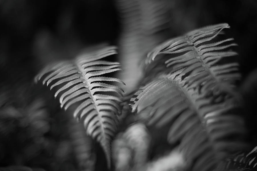 Ferns in Rain forest by Kyle Lee