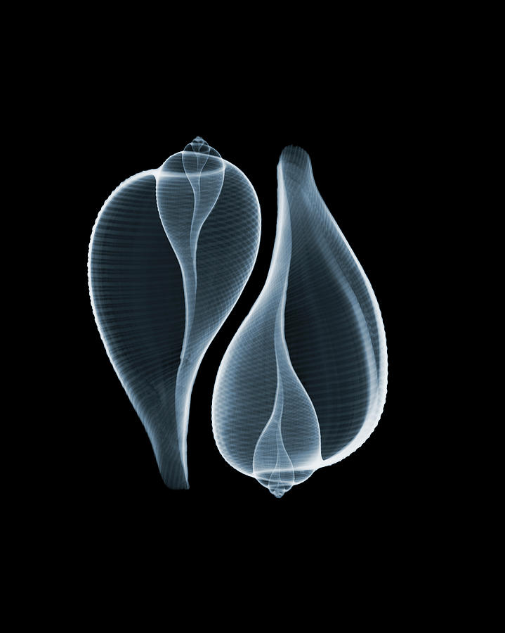 Ficus Communis Photograph by Nick Veasey