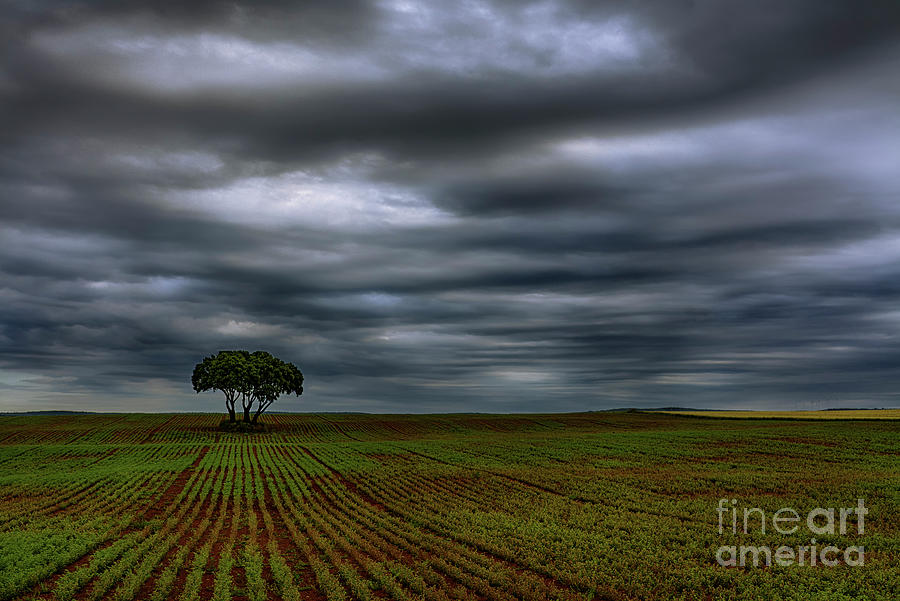Nature Photograph - Field And Storm by Vicente Sargues