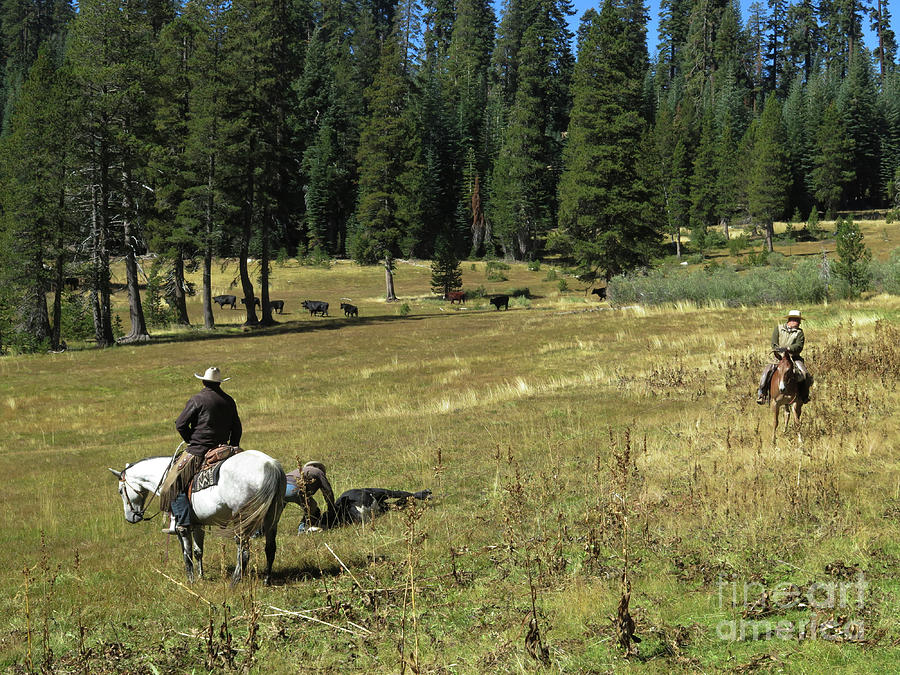 Field Doctoring by Diane Bohna
