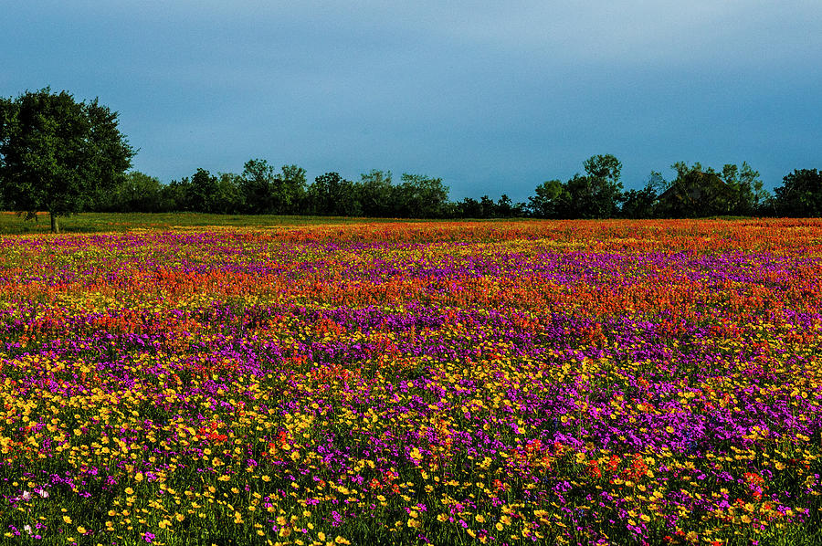 Field of Colorful Dreams by Johnny Boyd
