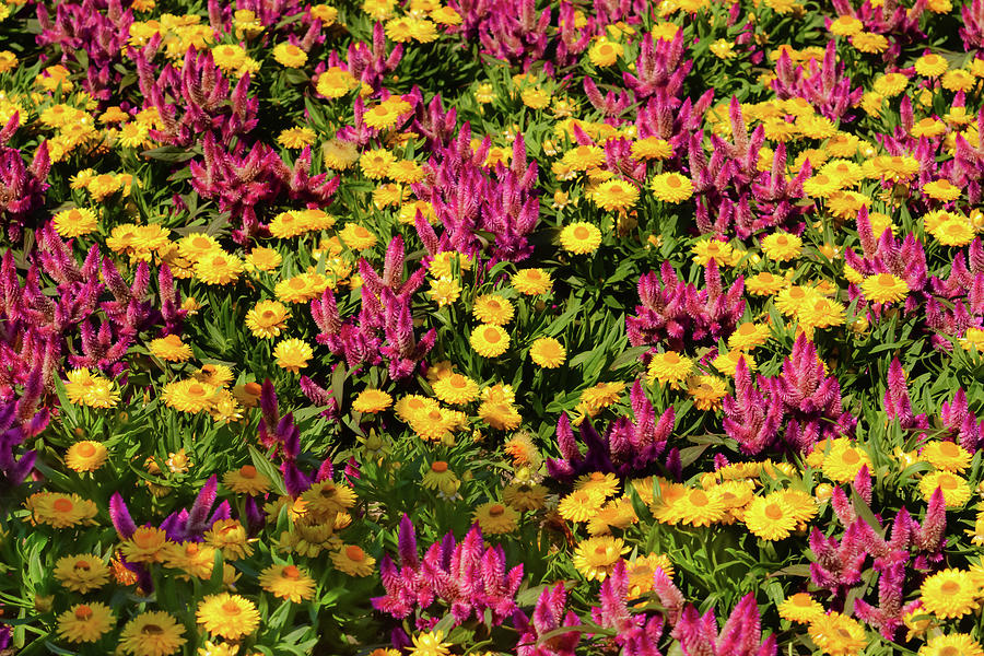 Field of colorful flowers by Zina Stromberg