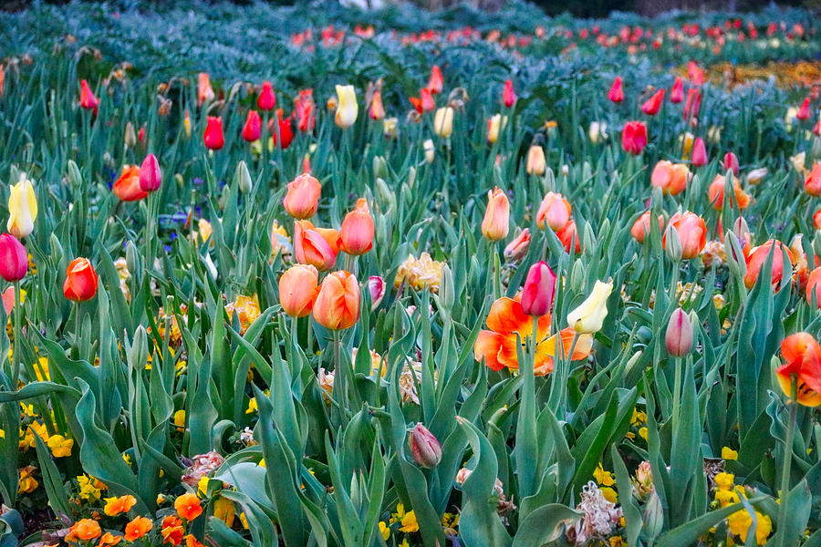 Field of Colors by Linda James