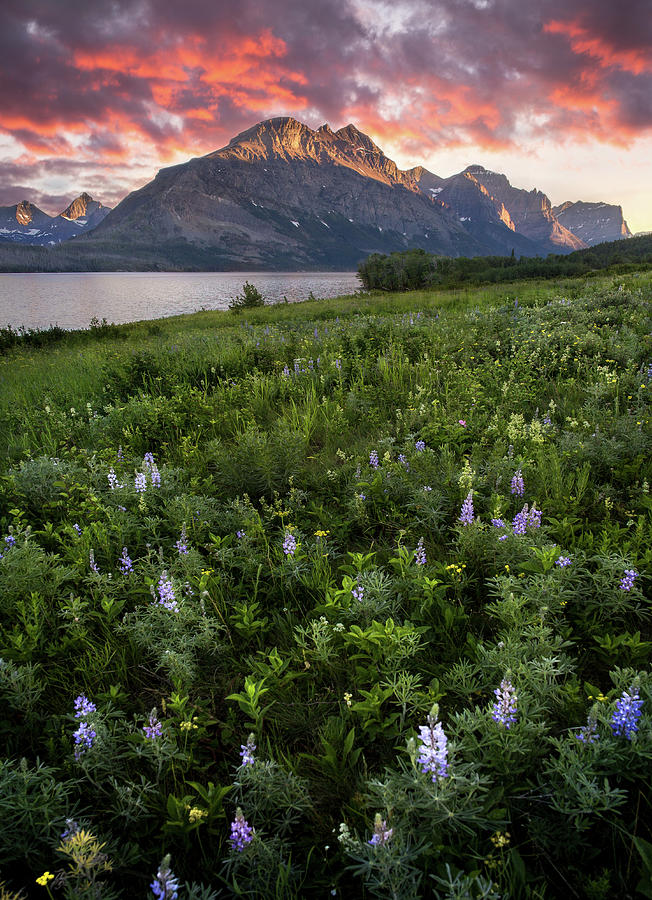 Field of Dreams / St. Mary Lake, Glacier National Park  by Nicholas Parker