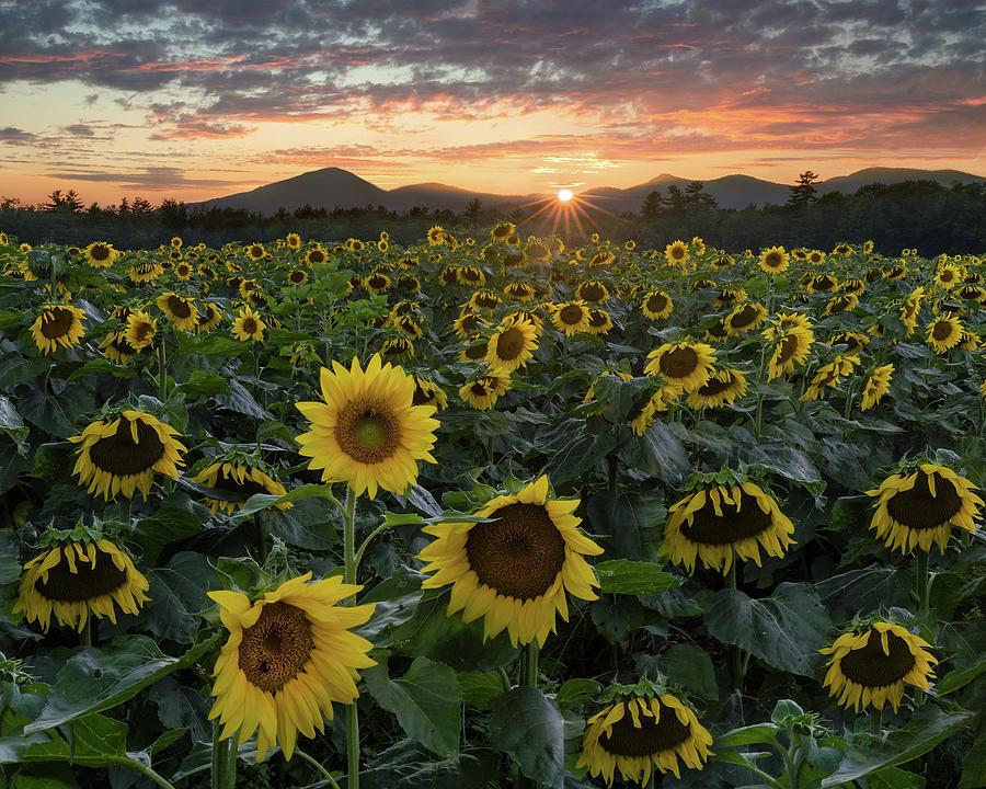 Field of Gold by Darylann Leonard Photography