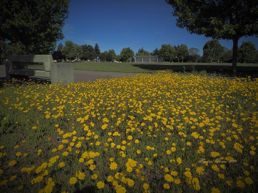Field of Golden Dream by Richard Thomas