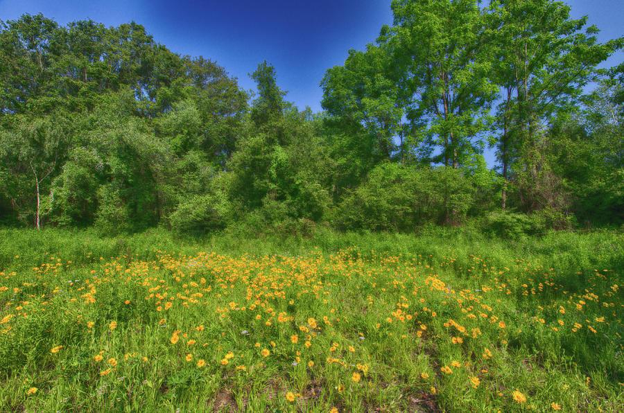 Field of Wildflowers by Crystal Wightman