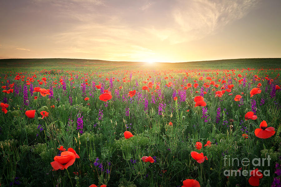 Beam Photograph - Field With Grass, Violet Flowers And by Esolex