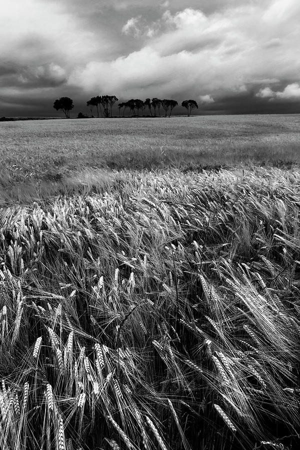 Nature Photograph - Field With Poppies And Trees. Vertical. B And W by Vicente Sargues