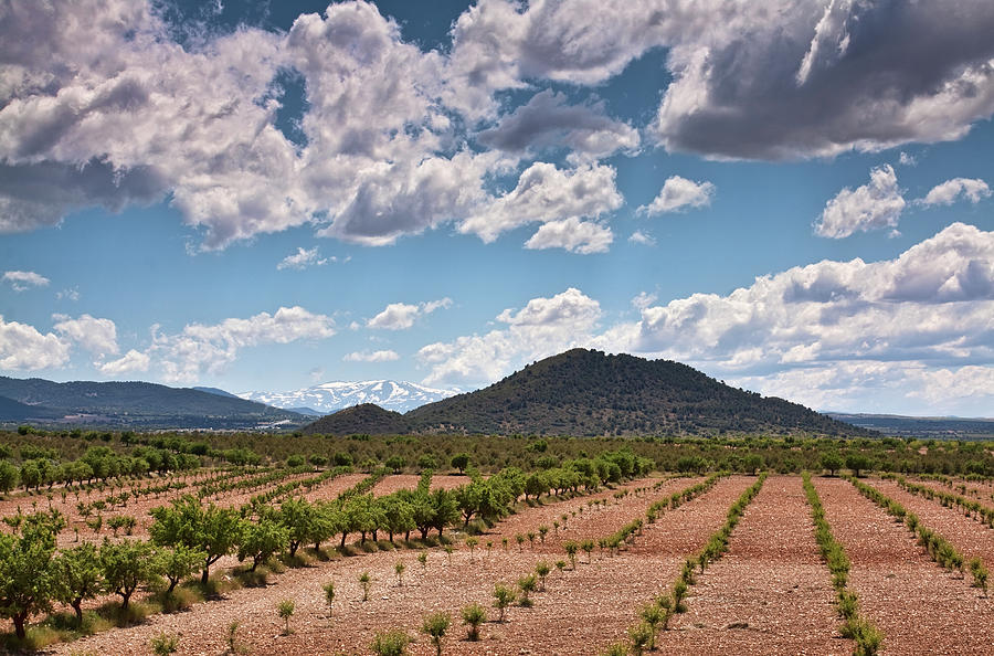 Fields and mountains in Andalusia  by Tatiana Travelways