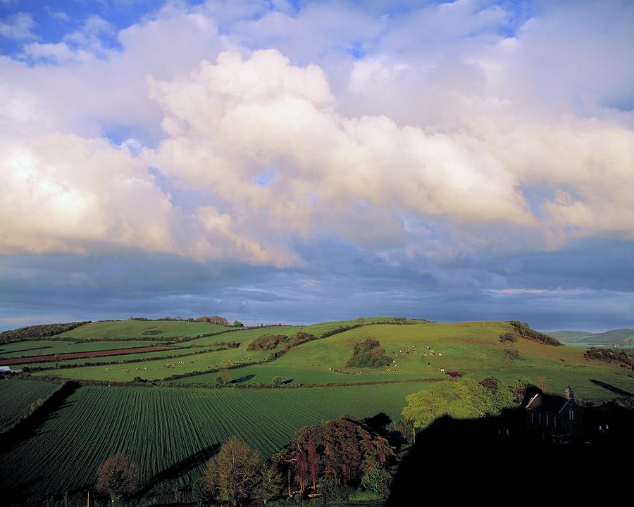 Fields Around Dunamace, Co Laois Photograph by Design Pics