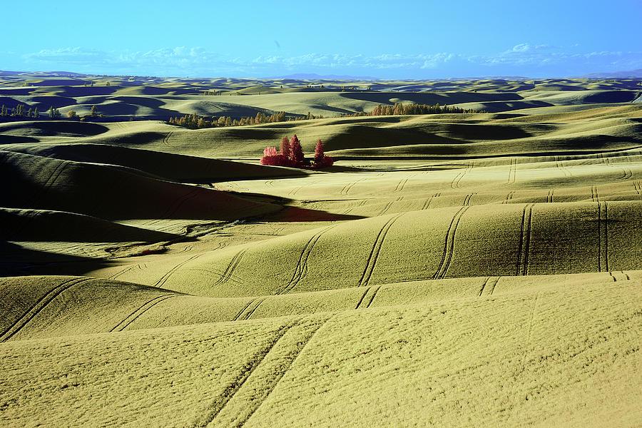 Fields in the Palouse by Jon Glaser