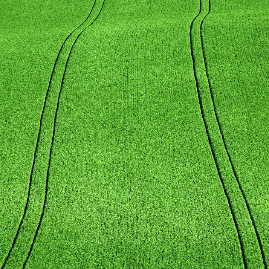 Fields Of Green Photograph by Paul Baggaley