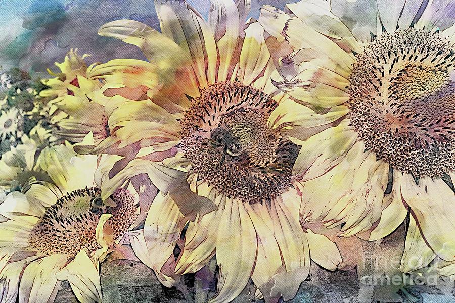 Fields of Sunflowers by Marcia Lee Jones