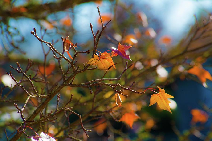 Fiery Autumn by Bonnie Bruno