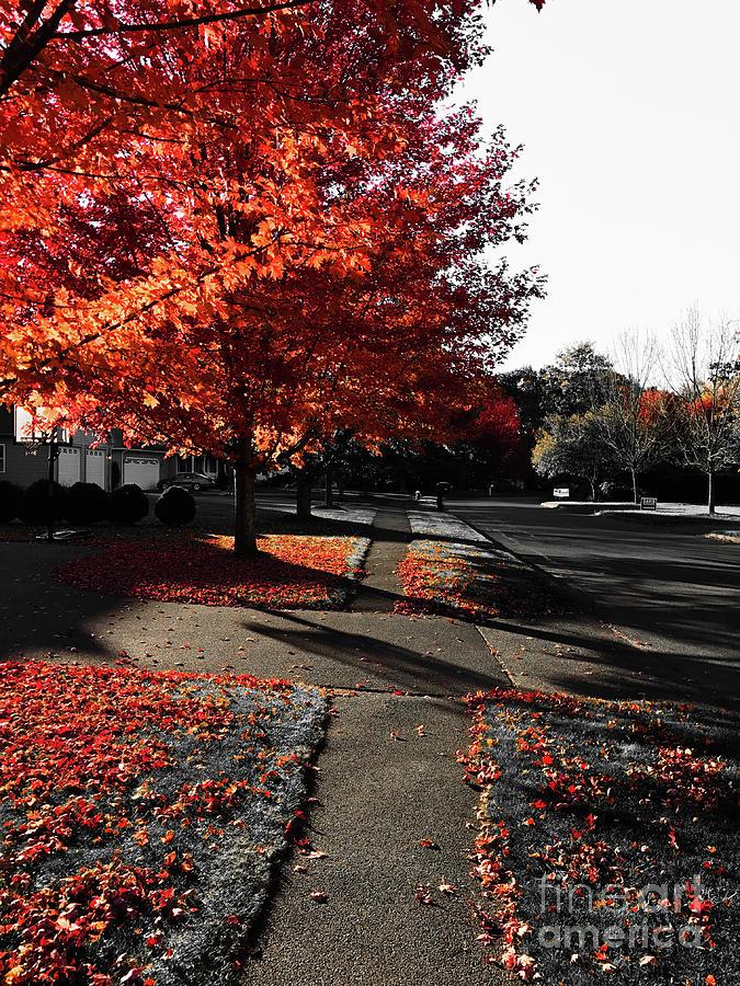 Fiery Fall Trees, Part 2 Photograph by JMerrickMedia