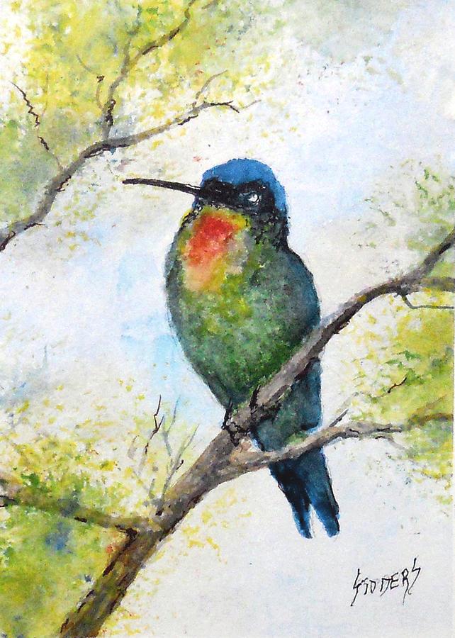 Fiery Throated Hummingbird by Sam Sidders