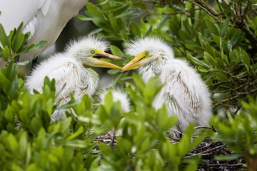 Fighting Chicks by Fran Gallogly