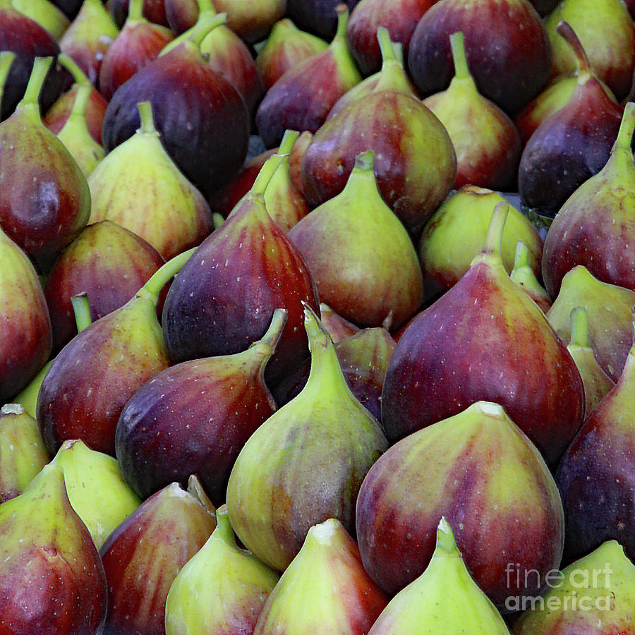 Figs by PJ Boylan