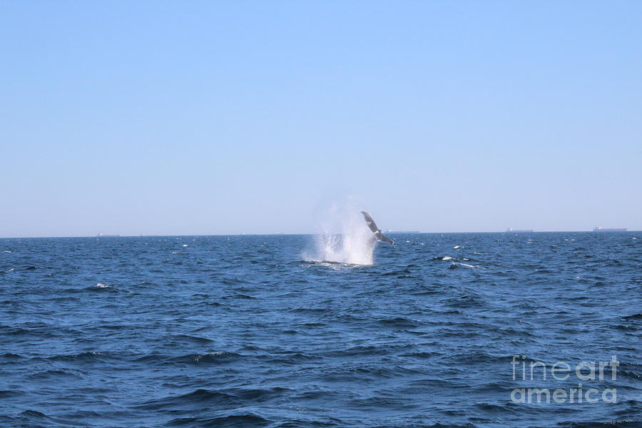 WHALE OF A TAIL by Barbra Telfer