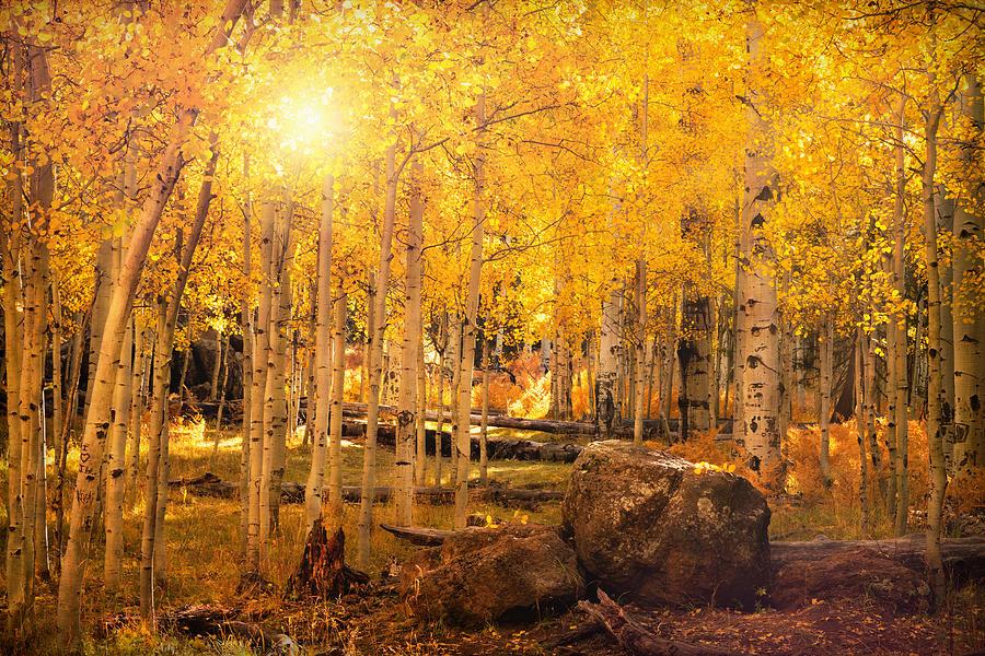 Finding Autumn Gold  by Saija Lehtonen