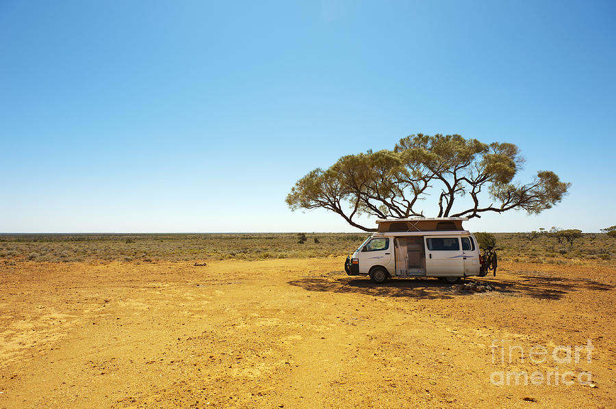 Country Photograph - Finding Shade Under A Lone Tree While by Pics By Nick