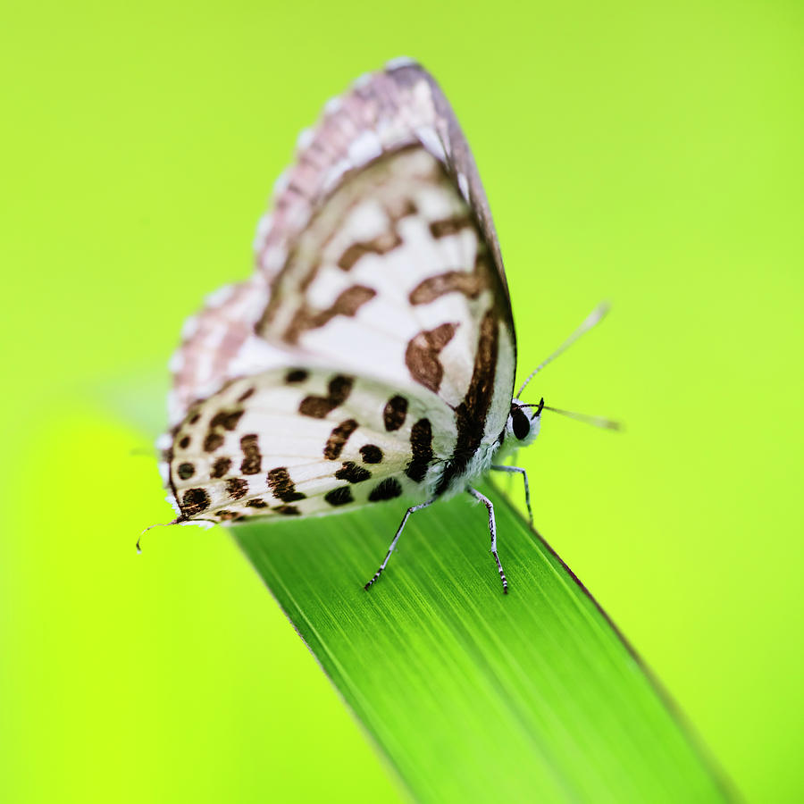 Fine thing in nature by Vishwanath Bhat